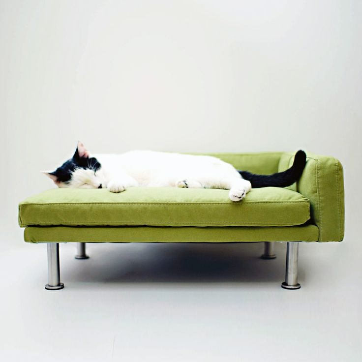 17 pieces of cat furniture that are totally purrr fect for Cat chaise longue