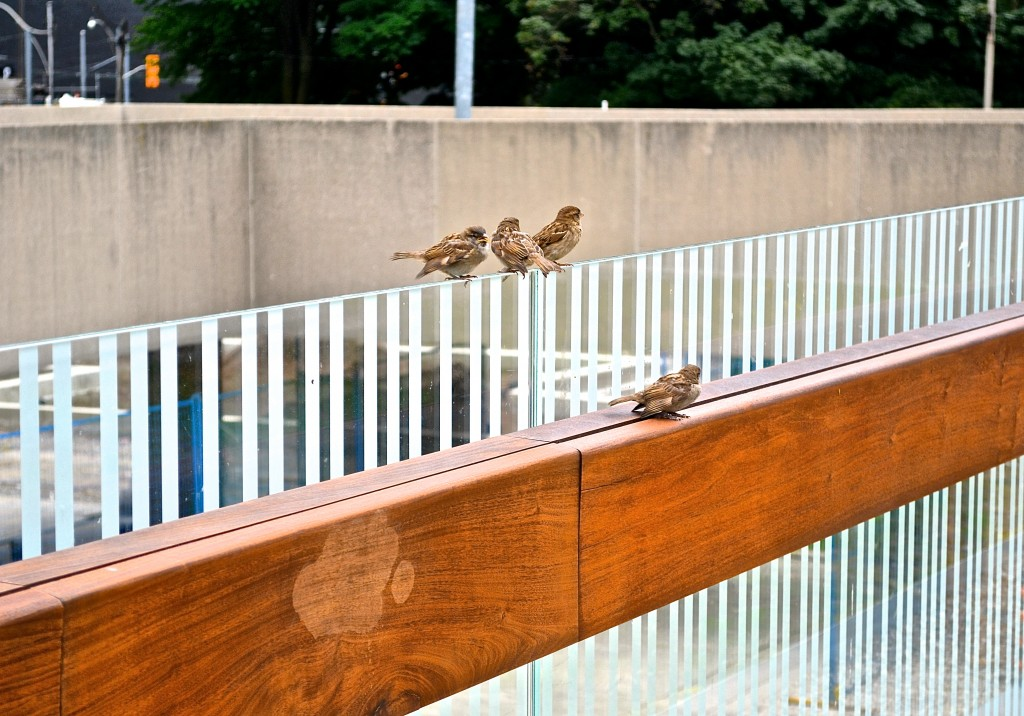 birds sitting on a glass ledge