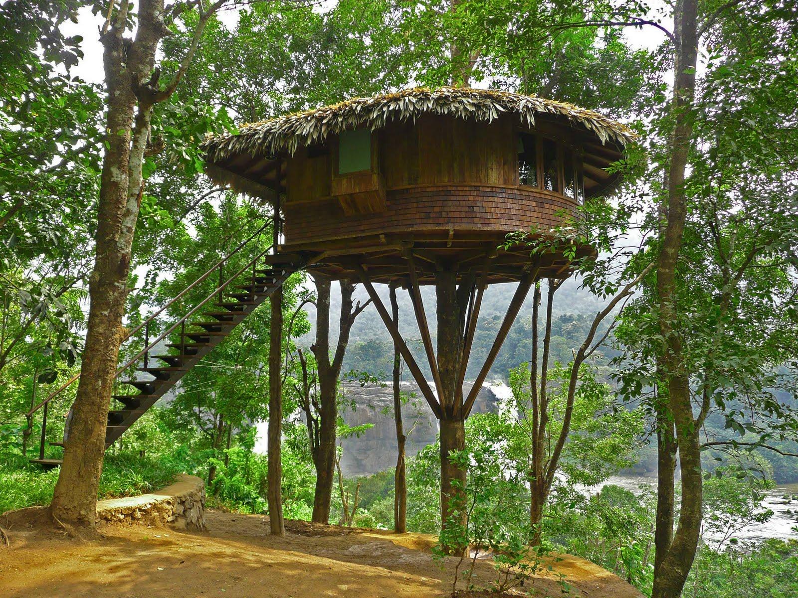 tree house-13