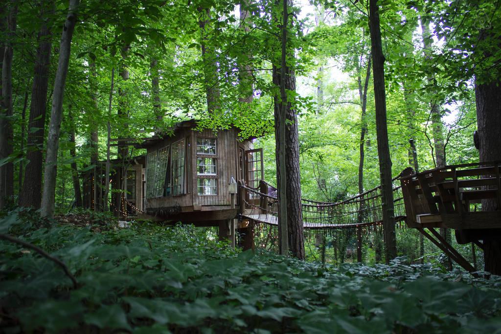 tree house-18