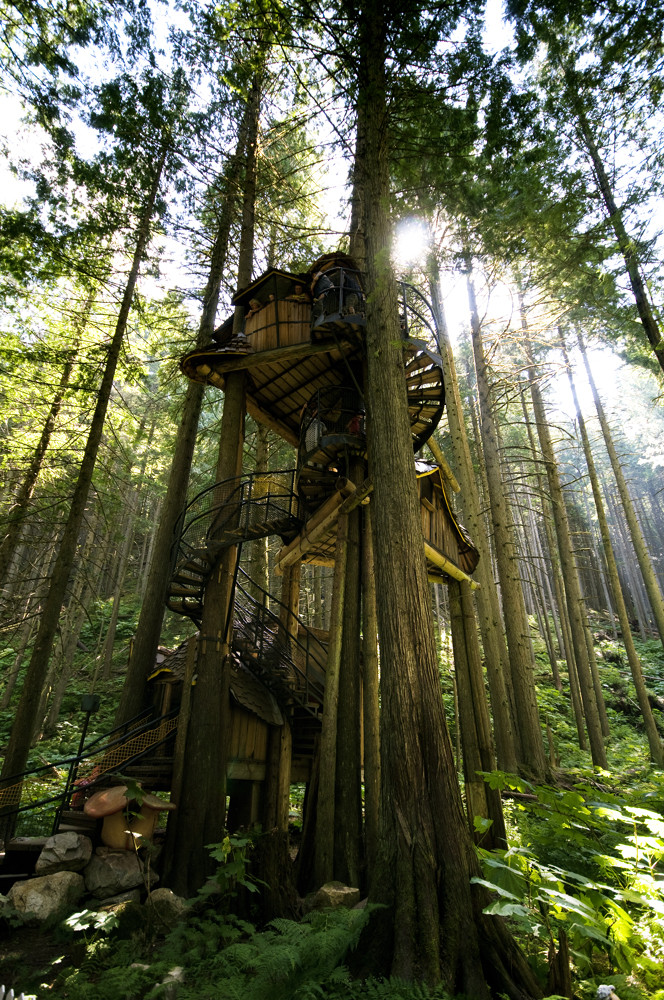 tree house-3