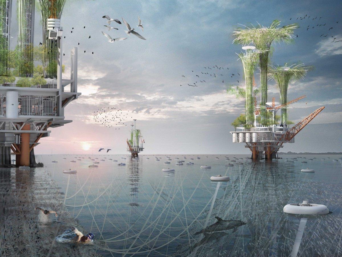 noah oasis