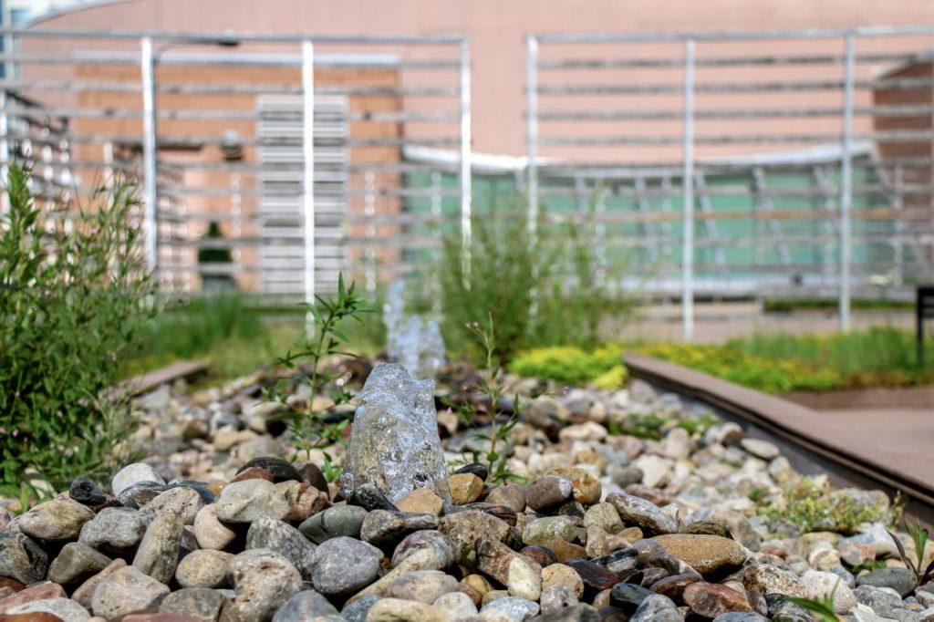 MetroYMCA green roof