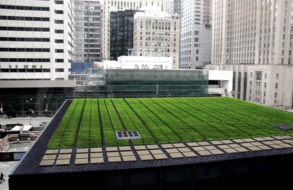 green roof td tower