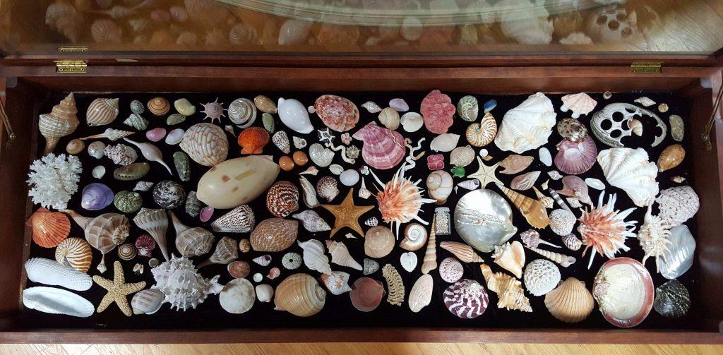 seashell display-compressed