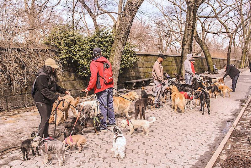 NYC Dog Walkers