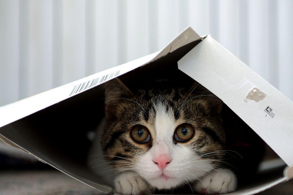 sad cat-compressed