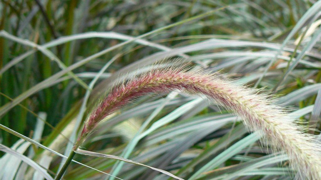 grass-min