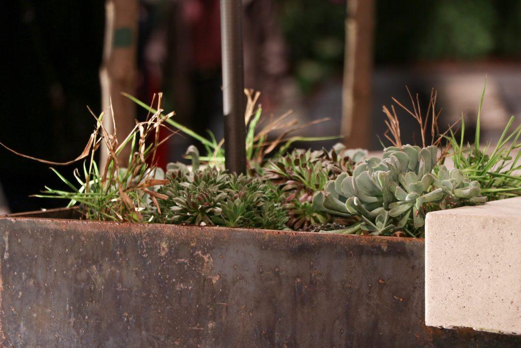 succulents-min