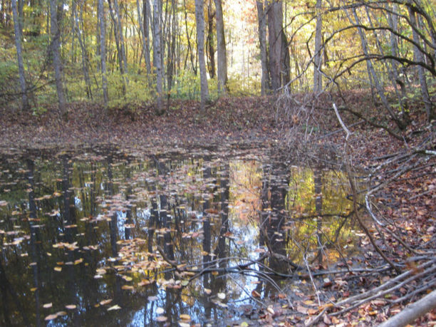 24256 Mock Knob Road pond