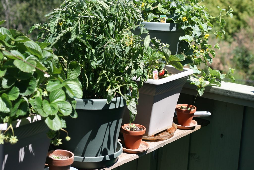 what improve gardening watch is can youtube you really container surprised may my garden pruning it be air