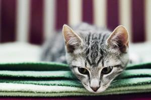 Flickr cat photo by Stefan Tell