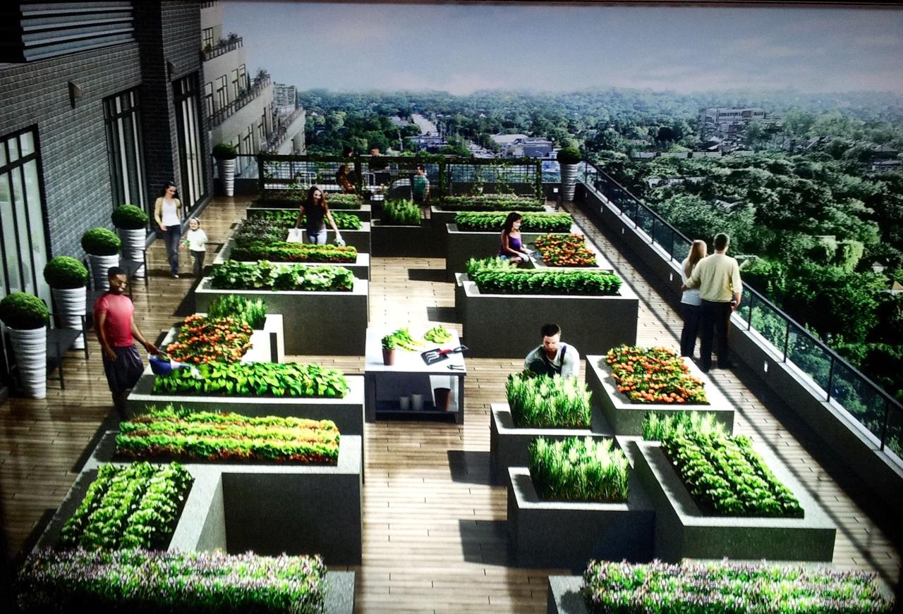 NY2 garden plots