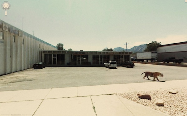 Google street view tiger