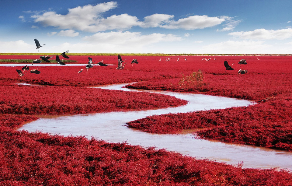 red-beach-panjin-china-1