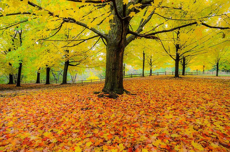 high park leaves