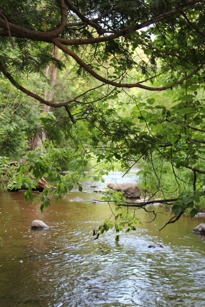 jackson creek meadows