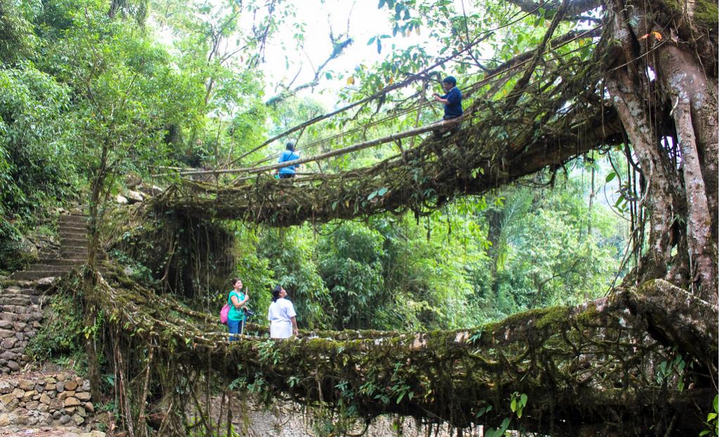 root bridge india