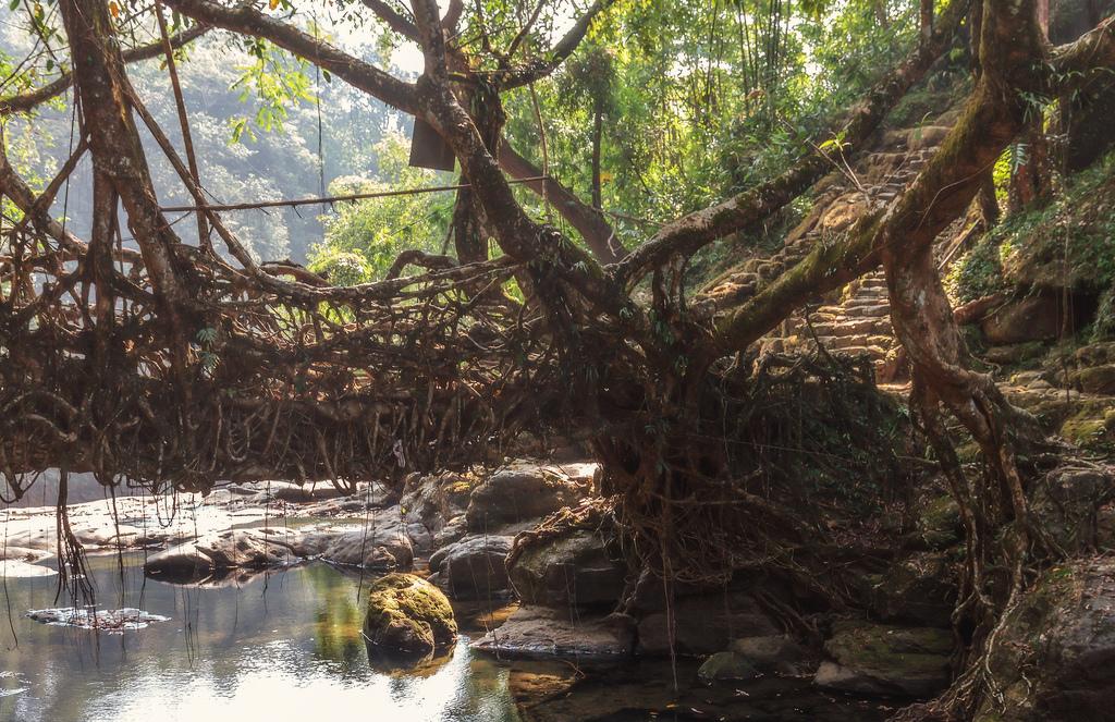 root bridges india 1