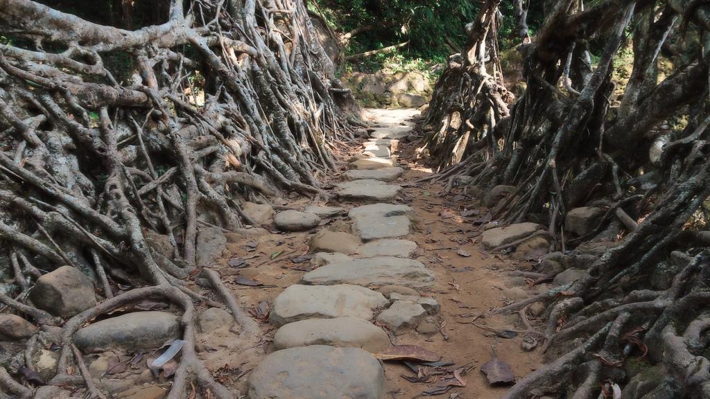 root bridges india 2