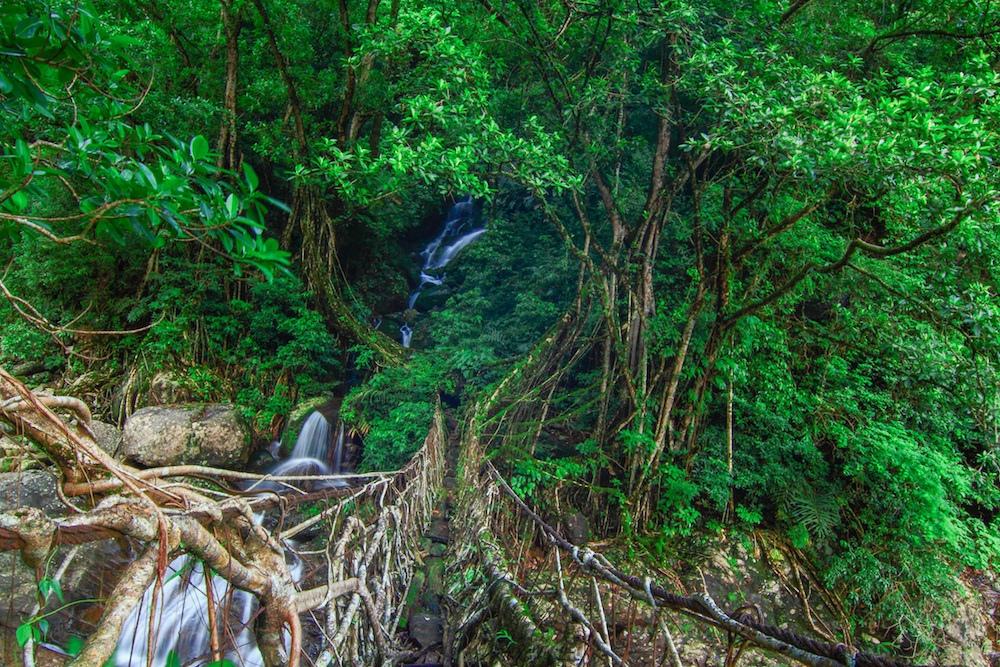 root bridges india 3