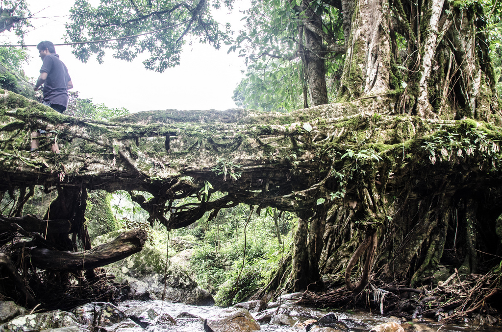 root bridges india 4