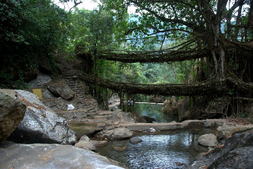 root bridges india