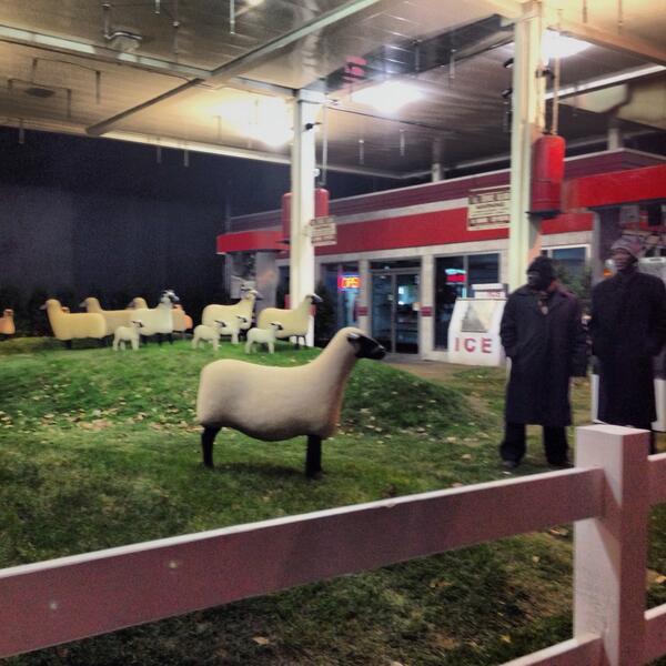 239 10th sheep