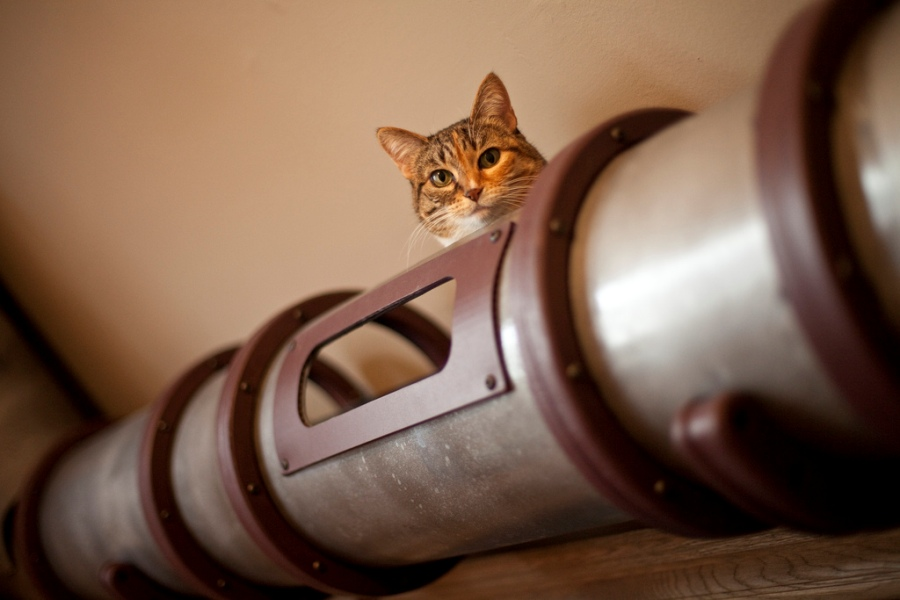 steampunk cat tunnel-1
