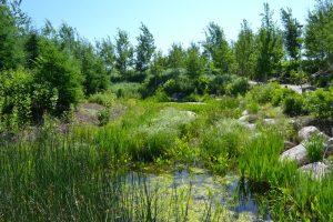 Corktown Common pond