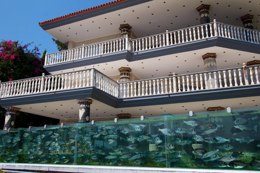 fence fish tank