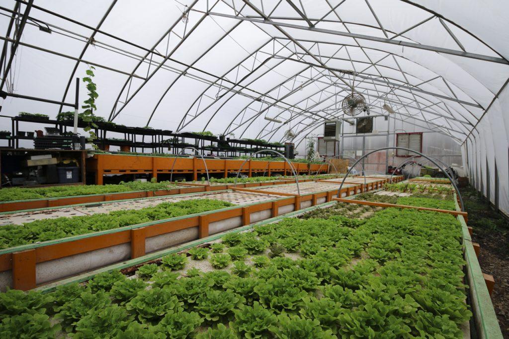 fresh city farms lettuce resized