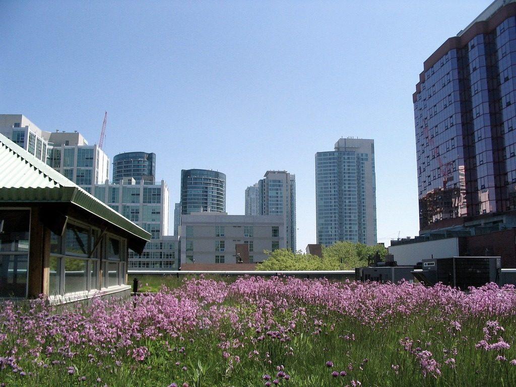 green roof toronto