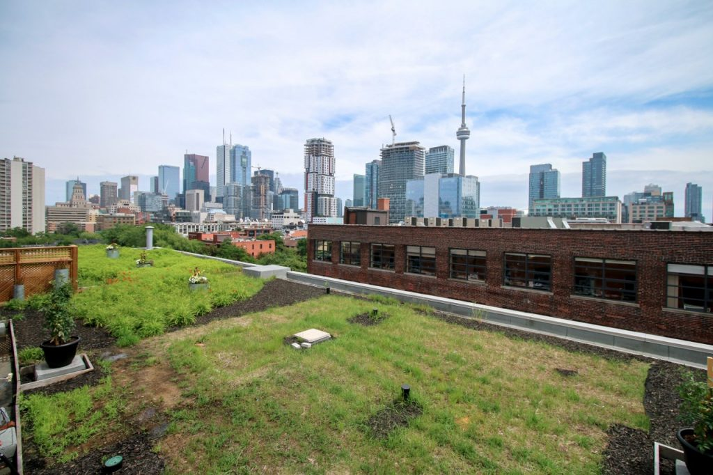 215 Spadina Green Roof