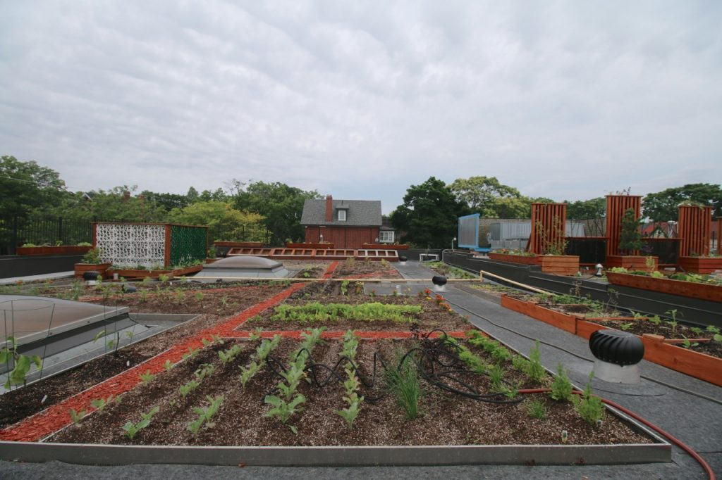 Danforth Green Roof