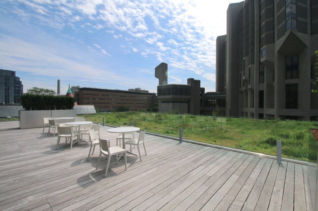 Rotman Green Roof