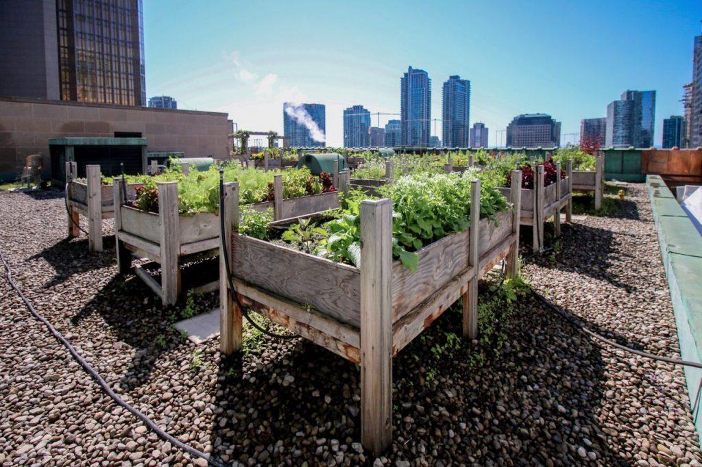royal york rooftop garden