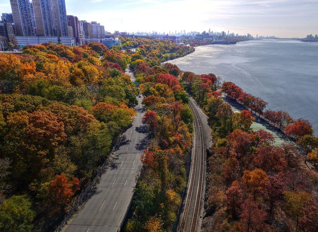 Trees NYC