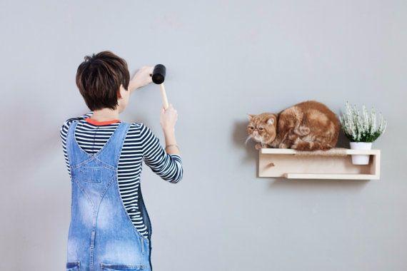 cat shelf-compressed