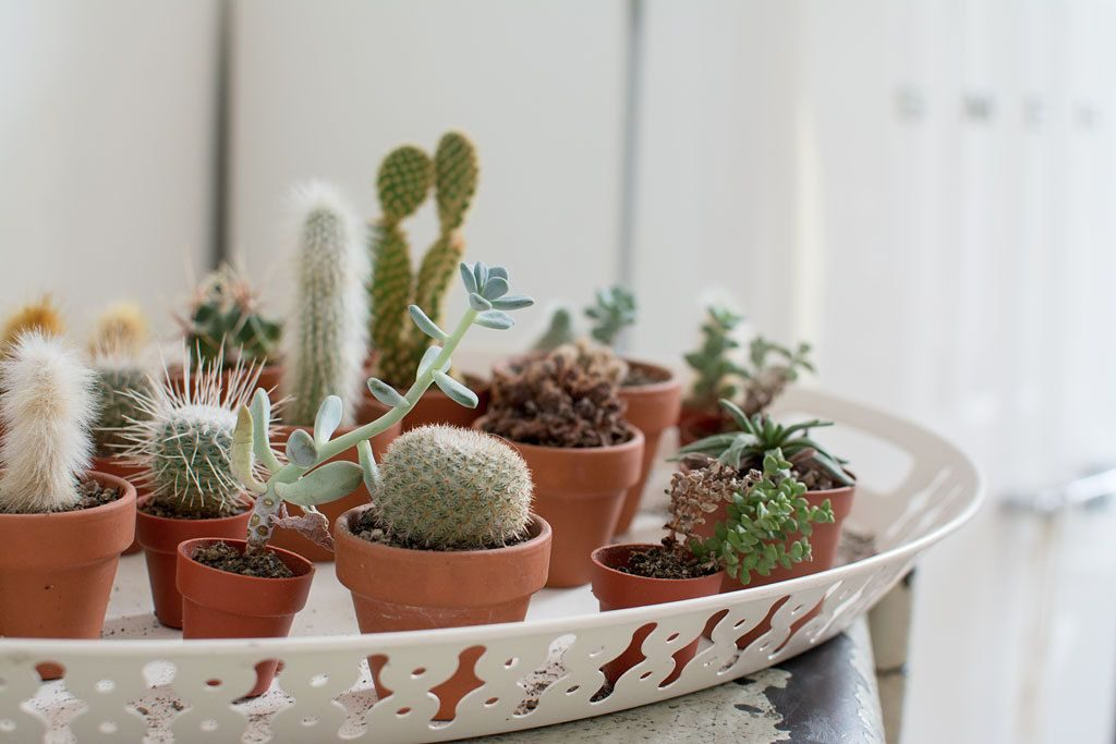 6 Tips For Picking The Best Indoor Plants For Condo And