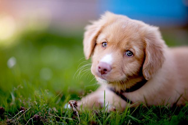 Tan Cute Puppy
