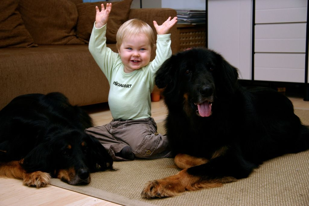 baby and dogs-compressed