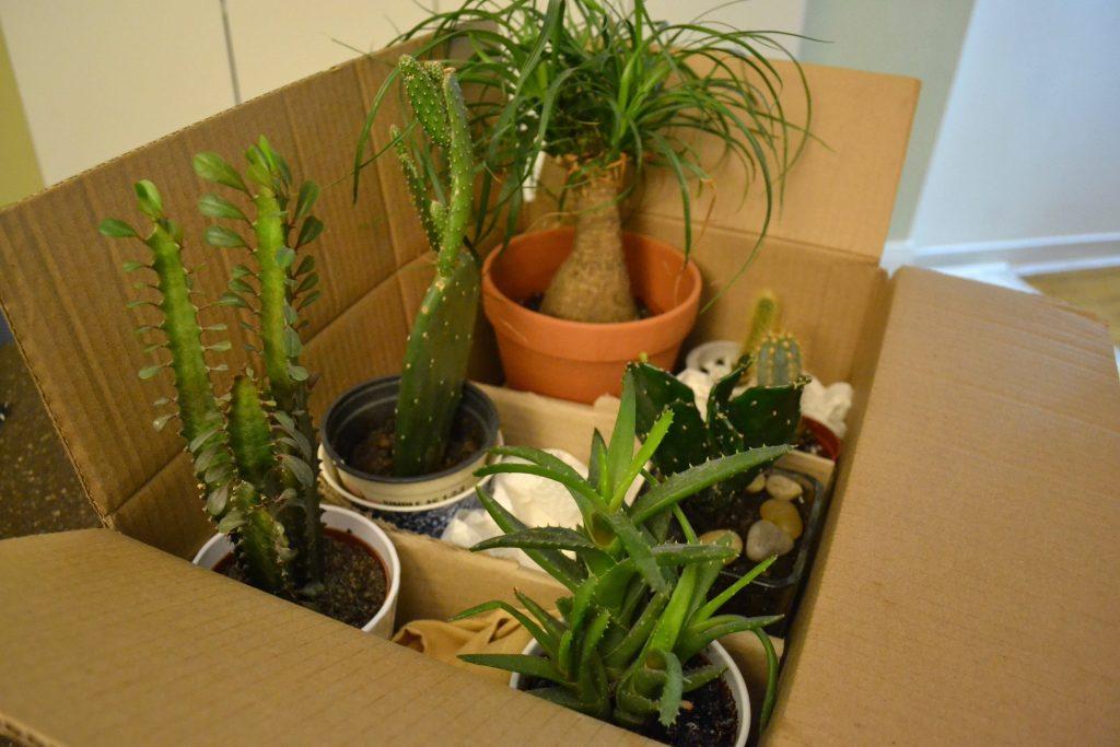 plants-min