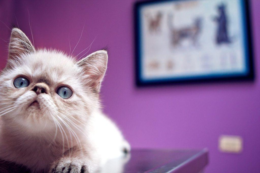 kitten at vet