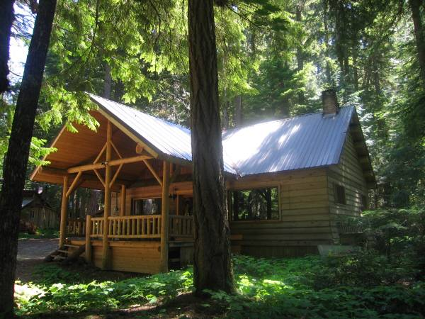 washington cabin old growth