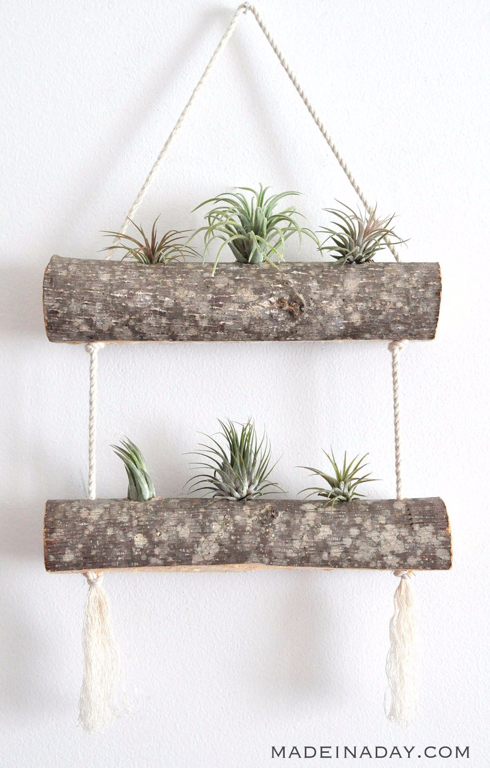 air plant hanger-compressed