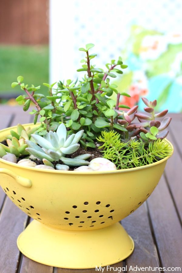 colander planter-compressed