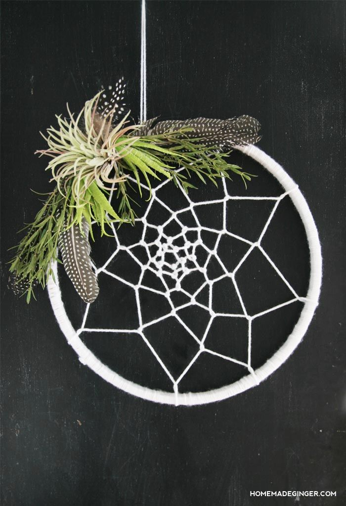 dream catcher air plant-compressed