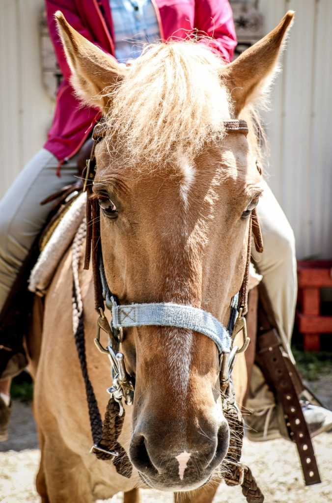 FoxHarb'r_Horseback