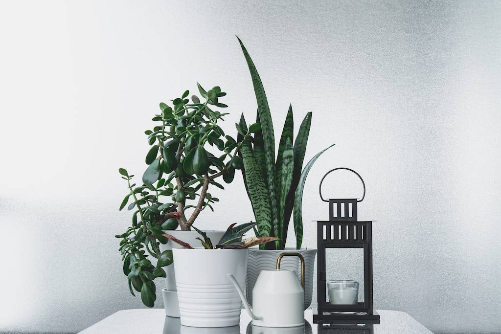 house plants for indoor air quality